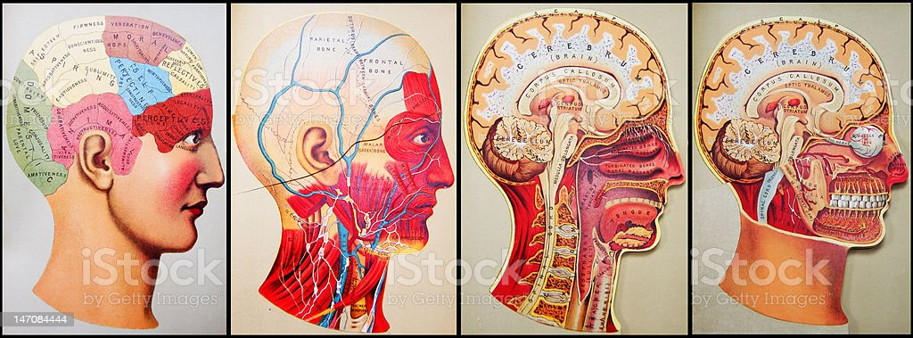 Antique Medical Illustrations | Quad Head royalty-free antique medical illustrations quad head stock vector art & more images of alertness