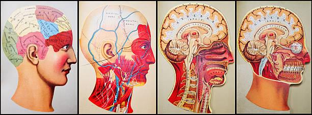 Antique Medical Illustrations | Quad Head http://thebrainstormlab.com/banners/ami_banner.jpg biomedical illustration stock illustrations