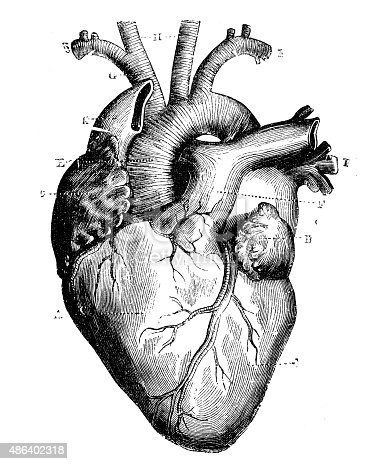 istock Antique medical scientific illustration high-resolution: heart 486402318
