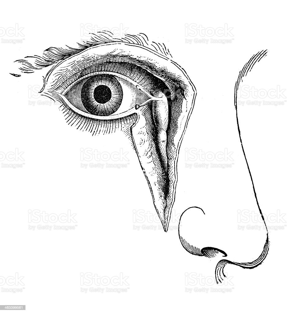 Antique Medical Scientific Illustration Highresolution Lacrimal ...