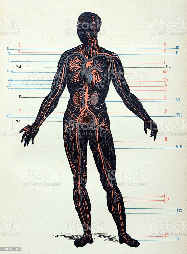 Antique medical scientific illustration high-resolution: Nervous system vector art illustration