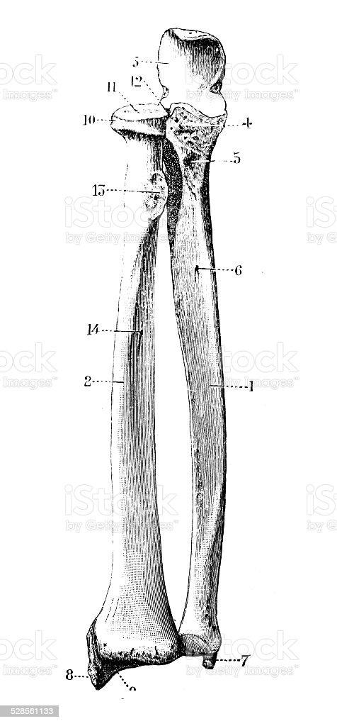 Ilustración de Anticuario Científica Médica Ilustración De Alta ...