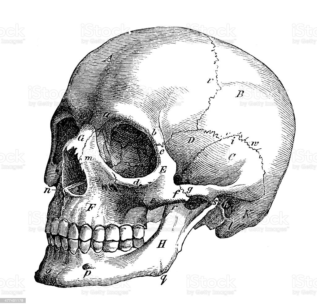 This is a photo of Astounding Skull Profile Drawing