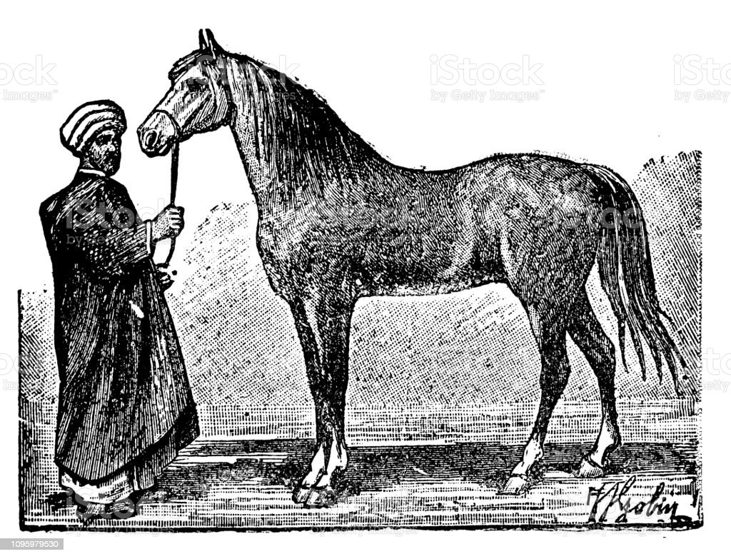 Antique Old French Engraving Illustration Horse Arab Stock Illustration Download Image Now Istock