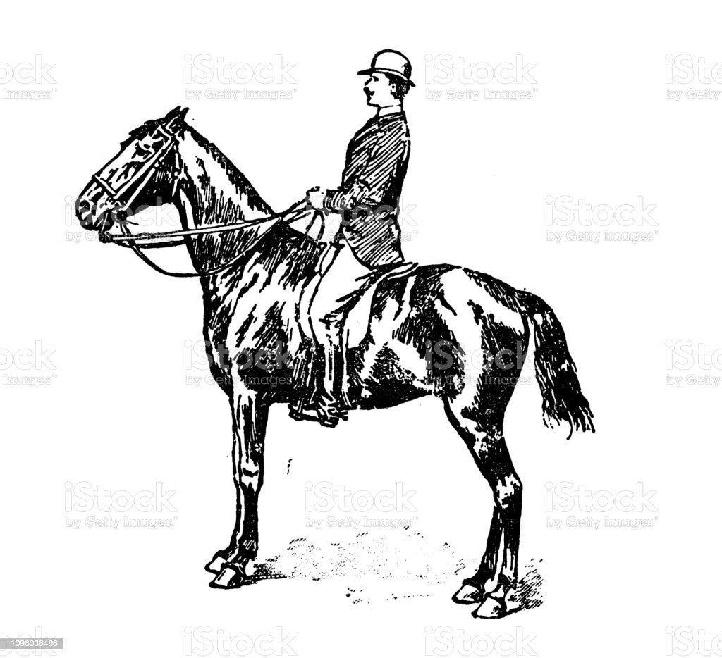 Antique Old French Engraving Illustration Horse Riding Stock Illustration Download Image Now Istock
