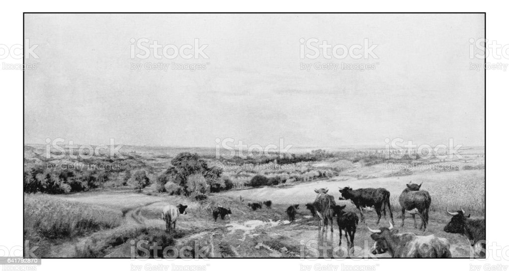 Antique photo of paintings: Landscape with cows vector art illustration