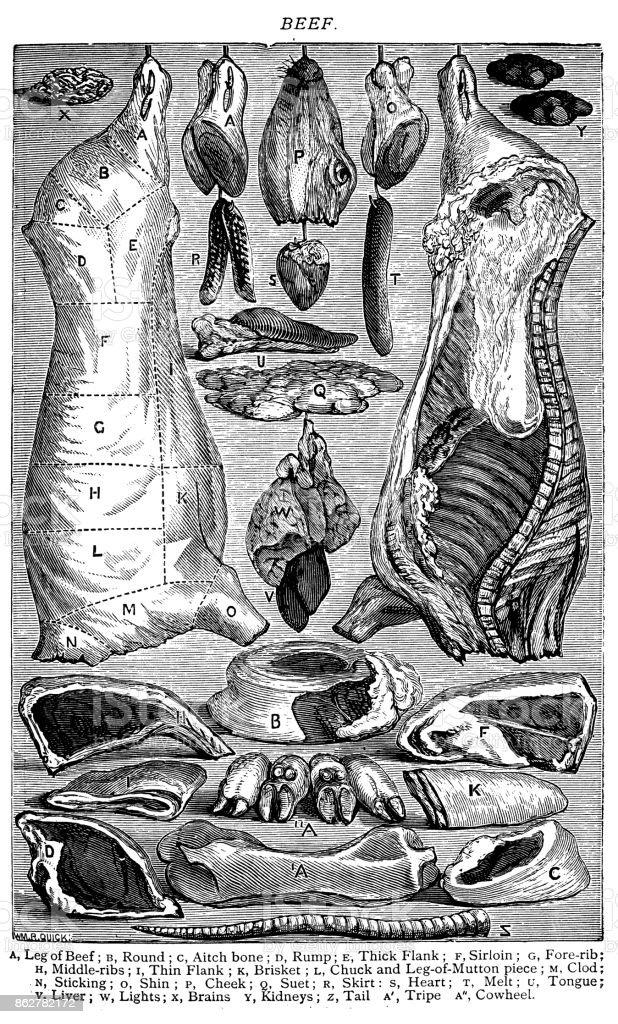 Antique recipes book engraving illustration: Beef vector art illustration