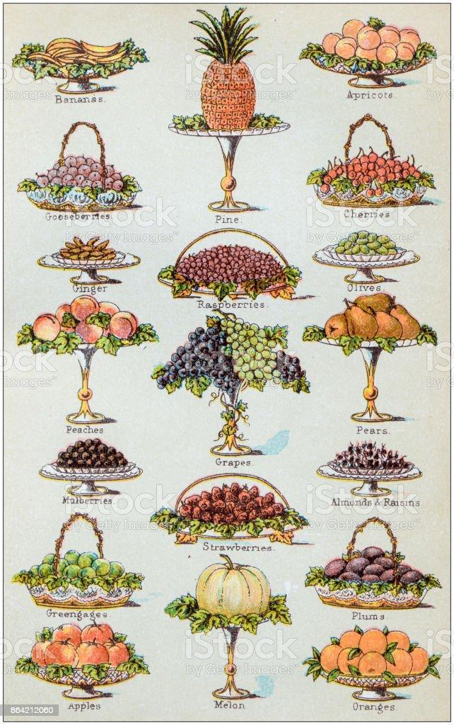 Antique recipes book engraving illustration: Fruit vector art illustration