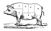 istock Antique recipes book engraving illustration: Pork sections 864396318