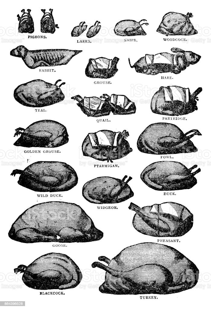 Antique recipes book engraving illustration: Poultry and gamebirds vector art illustration