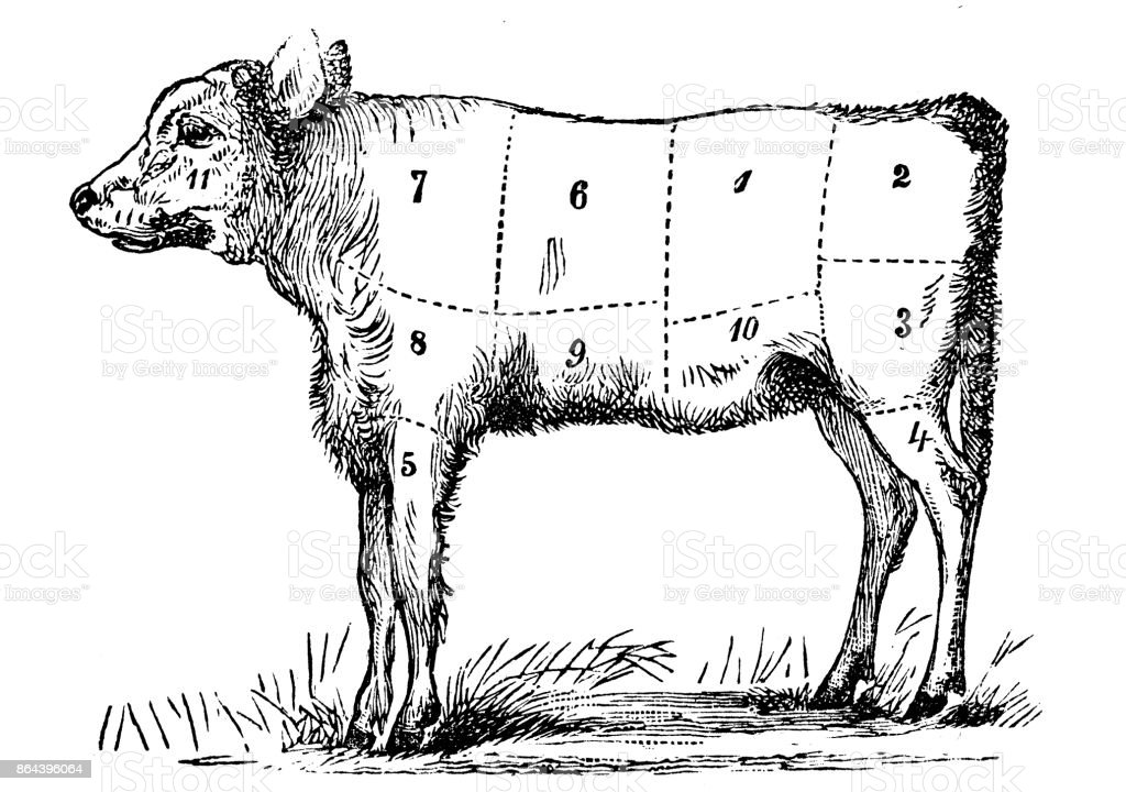 Antique recipes book engraving illustration: Veal sections vector art illustration