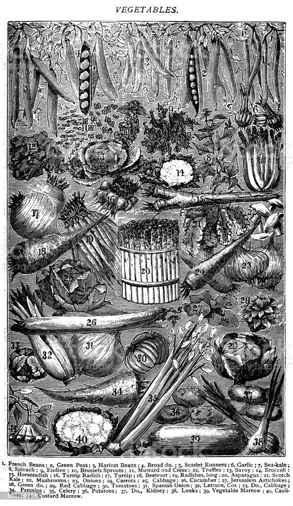Antique recipes book engraving illustration: Vegetables vector art illustration