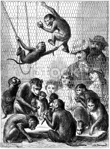 "A group of apes being watched by a family of visitors to a zoo at feeding time. The children are enchanted by the antics of the animals and their mamma is looking fondly at a mother ape with her baby. Perhaps the families are not so very different. From ""The Cottager and Artisan, 1873"", published by The Religious Tract Society, London."