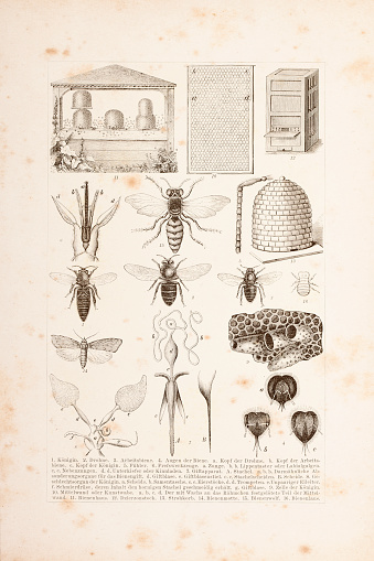 Apiculture bees engraving 1882