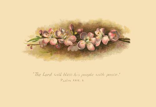 Apple blossom and psalm - Victorian illustration
