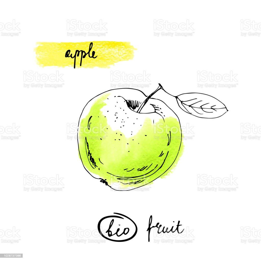 Apple Mit Schriftzug Namen In Gruner Farbe Isoliert Auf Weissem