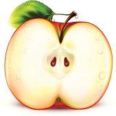 Apple Half Vector Illustration