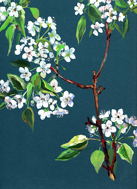 Apple in bloom  apple blossom stock illustrations