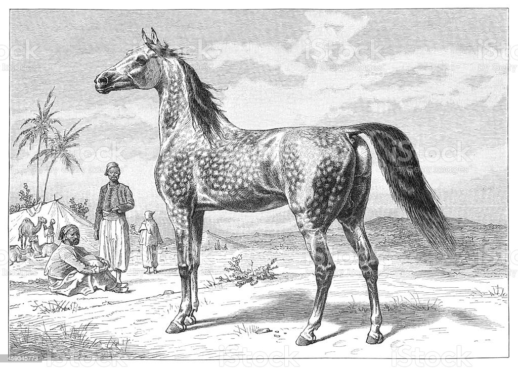 Arab horse engraving from 1877 vector art illustration