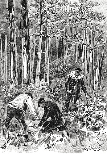 Arsonists at work in the forest
