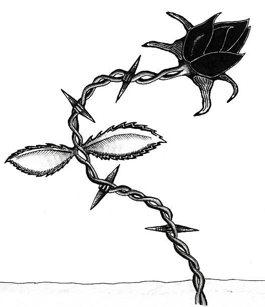 Art - Barbed Rose vector art illustration