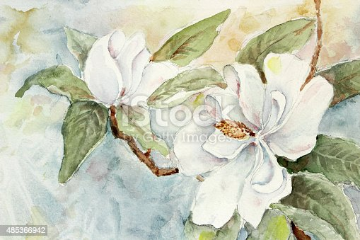 Beautiful watercolor painting of a branch with white magnolias. The background is done in soft shades of blue and gold.