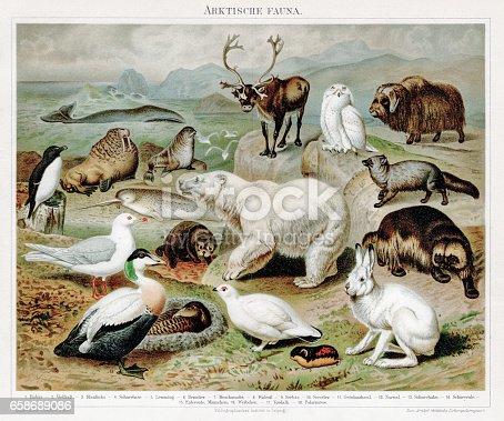istock Artic fauna chromolithograph 1895 658689086