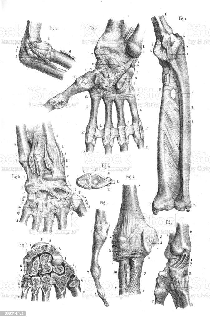 Charmant Kanal 131 Grays Anatomie Zeitgenössisch - Anatomie Ideen ...