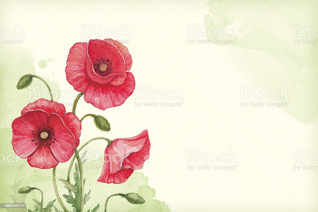 Artistic background with watercolor illustration of poppy flowers vector art illustration