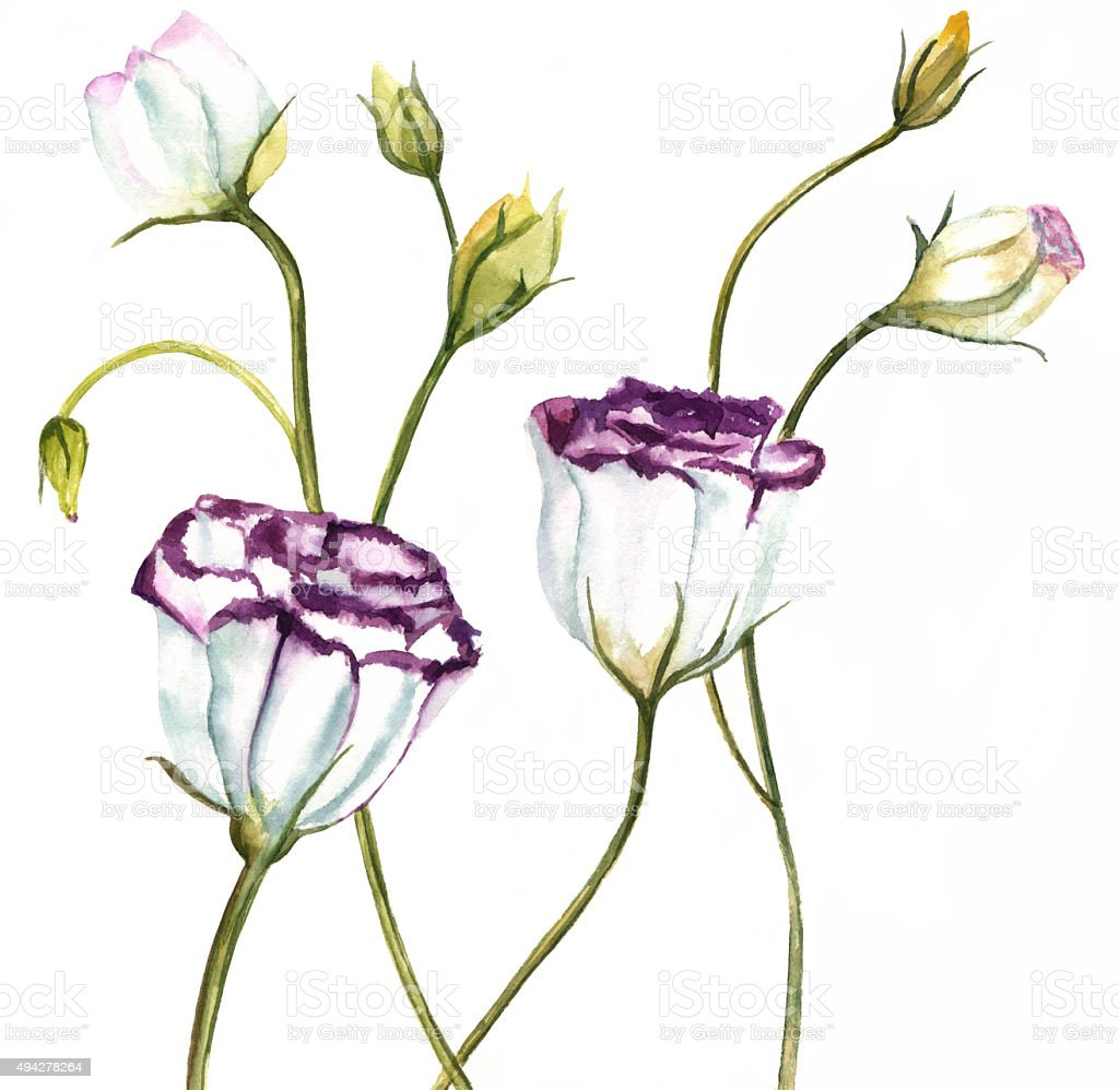 Artistic branch of lisianthus flowers on white backgro for Lisianthus art floral