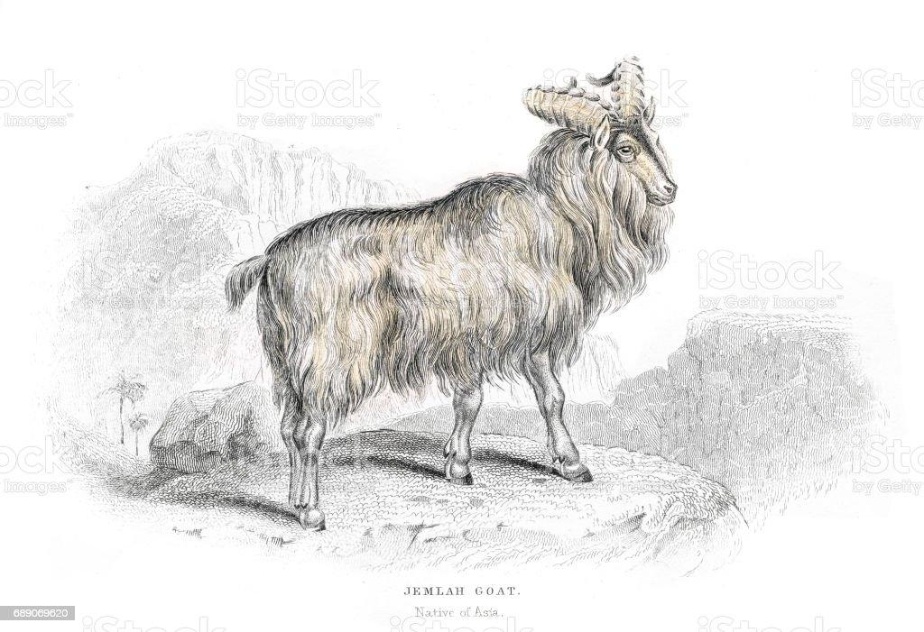 Asian mountain goat lithograph 1884 vector art illustration
