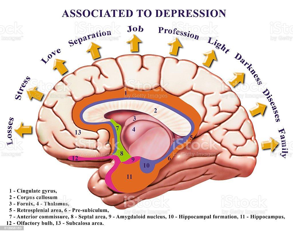 Assocdepre Stock Vector Art & More Images of Brain 513958163 | iStock