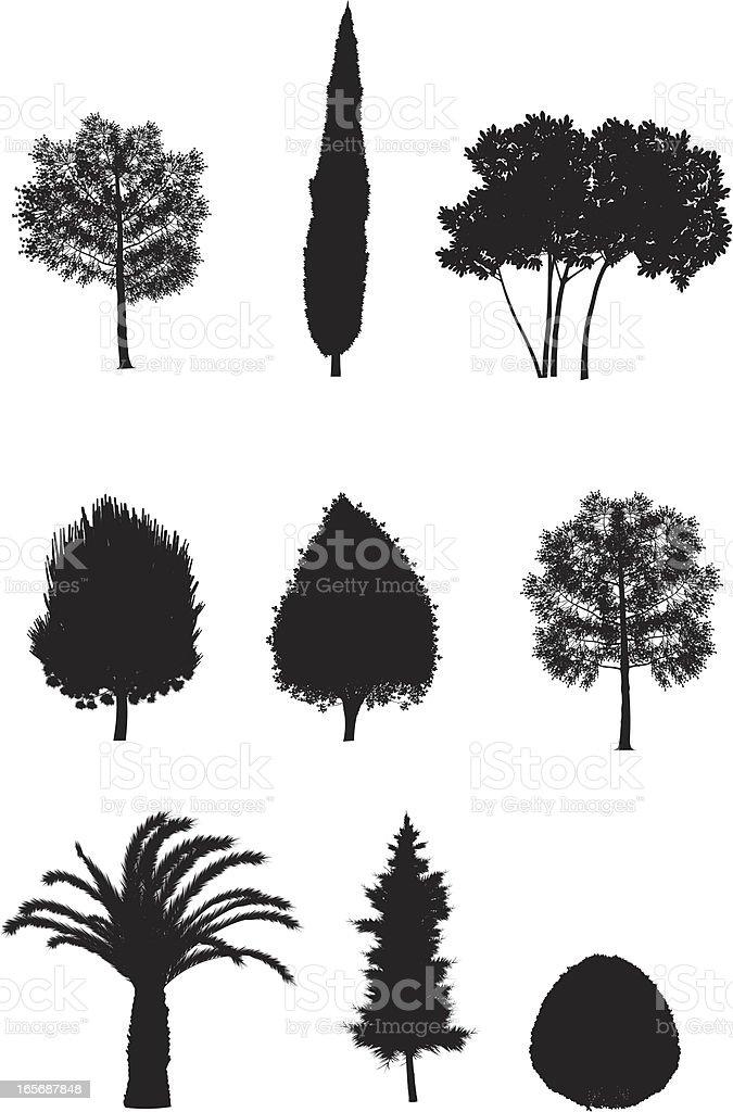 Assorted trees vector art illustration