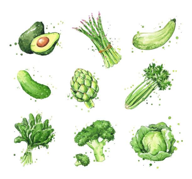 Assortment of green foods, watercolor vegtables illustration Assortment of green foods, watercolor vegtables illustration avocado drawings stock illustrations