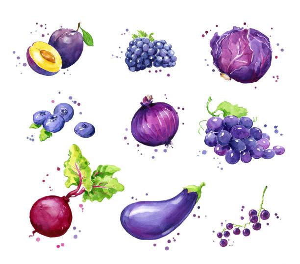 Assortment of purple foods, watercolor fruit and vegtables Assortment of purple foods, watercolor fruit and vegtables black currant stock illustrations