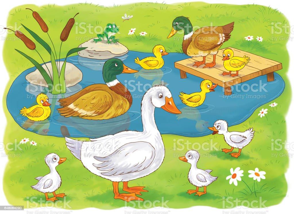 Kleurplaten Watervogels.Op De Boerderij Familie Van Schattige Eenden En Ganzen Illustratie