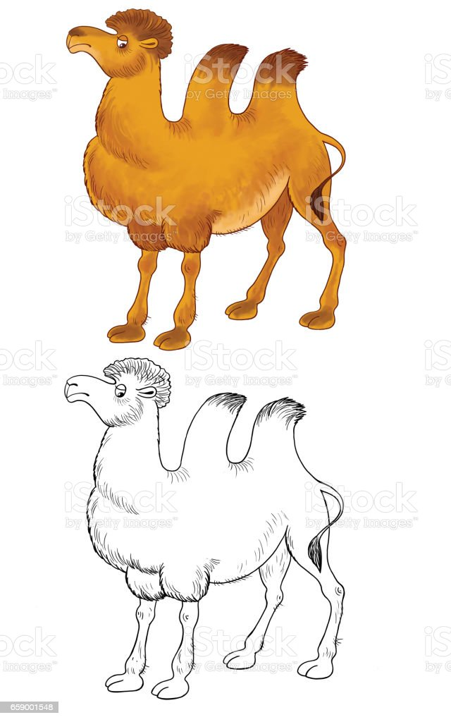 At the zoo. Cute African animals. A camel. Illustration for children. Coloring page royalty-free at the zoo cute african animals a camel illustration for children coloring page stock vector art & more images of africa