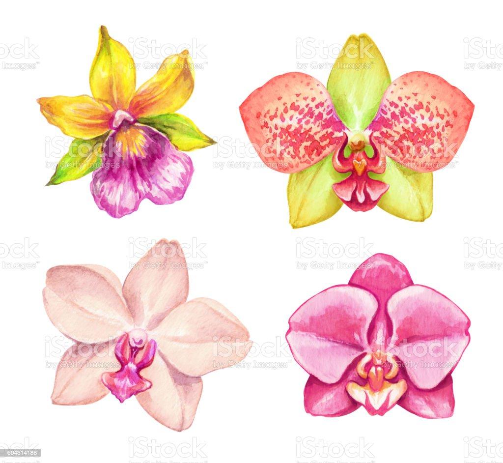 Atercolor Orchids Tropical Flowers Botanical Clip Art ...