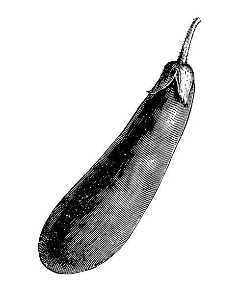 ilustraciones, imágenes clip art, dibujos animados e iconos de stock de color berenjena ilustraciones/vegetales de jardín vintage clipart - comida española