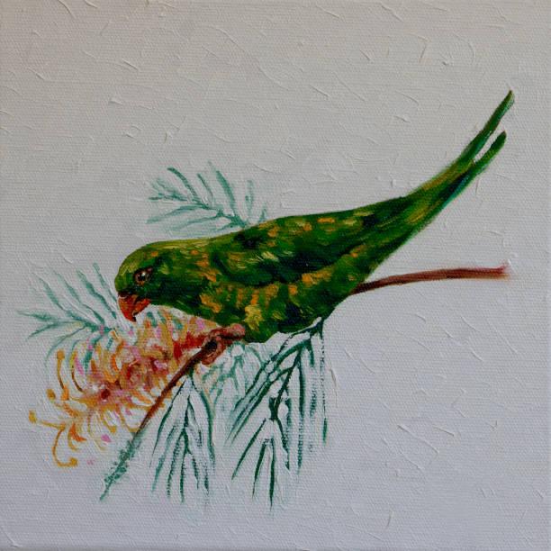 Australian Scaly-breasted Lorikeet Trichoglossus chlorolepidotus Feeding on Grevillea Flower Oil Painting vector art illustration