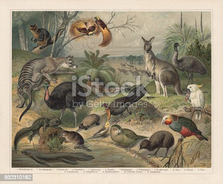 Australian wildlife, lithograph, published in 1897