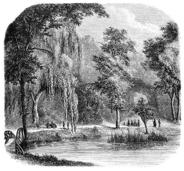 Auteuil Pond in Bois de Boulogne Park Before the Siege of Paris - 19th Century Auteuil Pond in Bois de Boulogne Park in Paris, France from Magasin Pittoresque. Vintage etching circa mid 19th century. bois stock illustrations