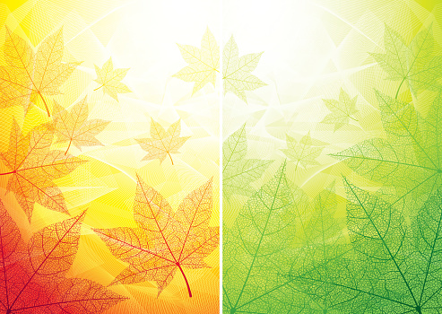 Autumn and summer backgrounds