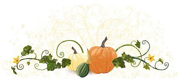 Pumpkin Vine Illustrations, Royalty-Free Vector Graphics ...