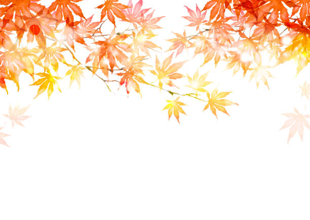 Autumn leaves Autumn leaves fall background stock illustrations