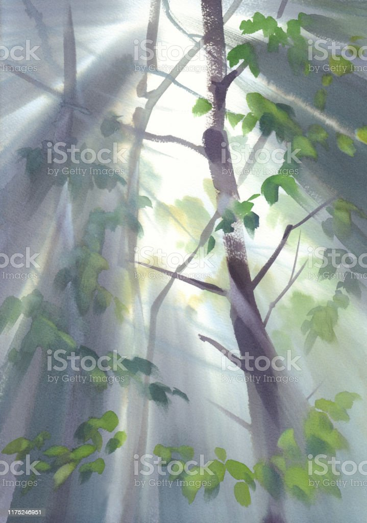 autumn light in the forest watercolor landscape stock illustration download image now istock https www istockphoto com vector autumn light in the forest watercolor landscape gm1175246951 327192841