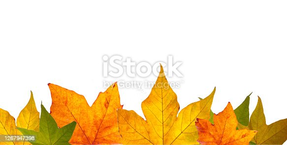 istock Autumn template with blank space and autumn leaves 1267947398