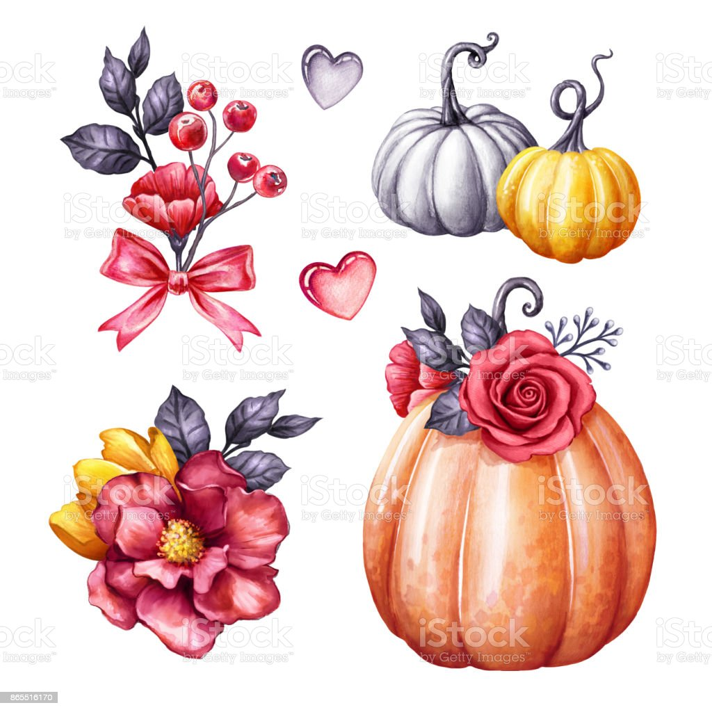 autumn watercolor pumpkin illustration, Halloween ornaments, fall flowers, squash, gourd, festive clip art, design elements isolated on white background vector art illustration