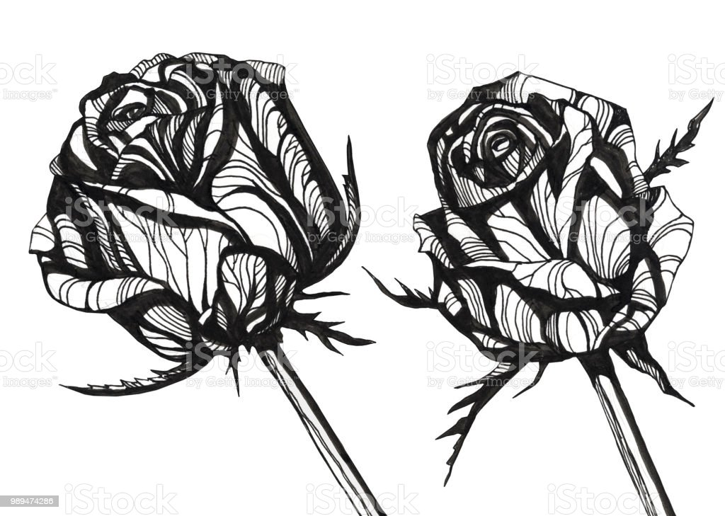 Tolle Blumen Hand Gezeichnet U2029ink Abbildung Stock Vektor Art Und