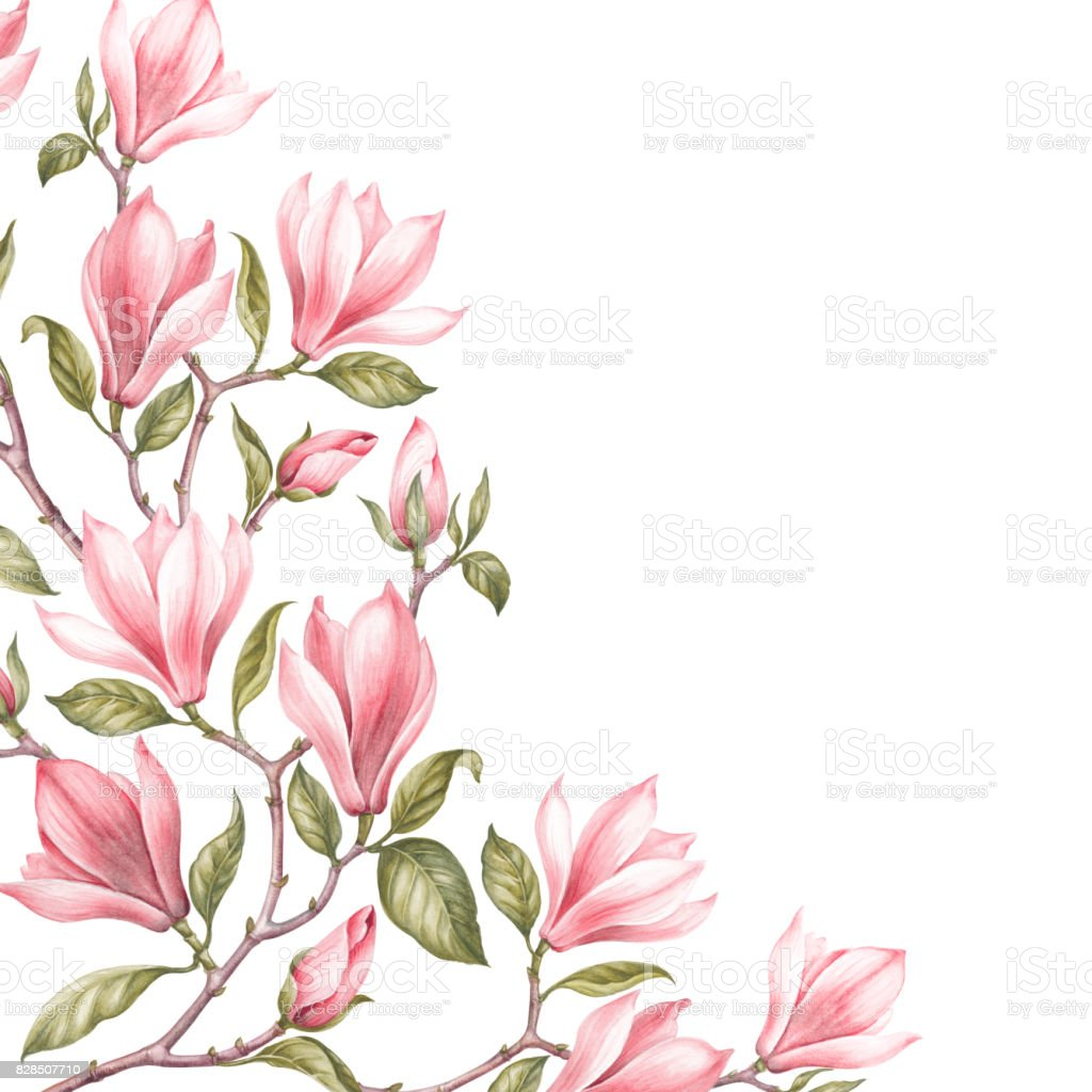 Awesome Magnolia Border Stock Vector Art More Images Of Abstract
